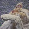 "Cirque de Cat, oil on canvas, 30"" x 30"""