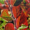 "Harvest, oil on canvas, 7"" x 7"""