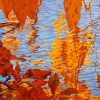 """Fall Reveal, oil on canvas, 36"""" x 48"""""""