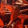 Red Leaf Study