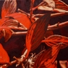 """Red Leaf Study, oil on canvas, 9"""" x 9"""" (SOLD)"""